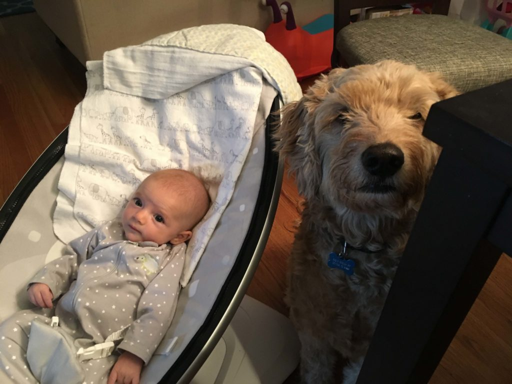 A baby in a Mamaroo with a dog next to her